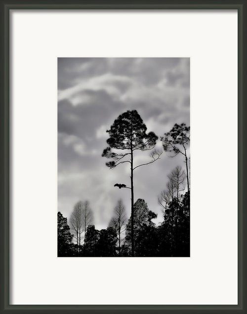 When The Air Gets Too Thin Framed Print By Jan Amiss Photography