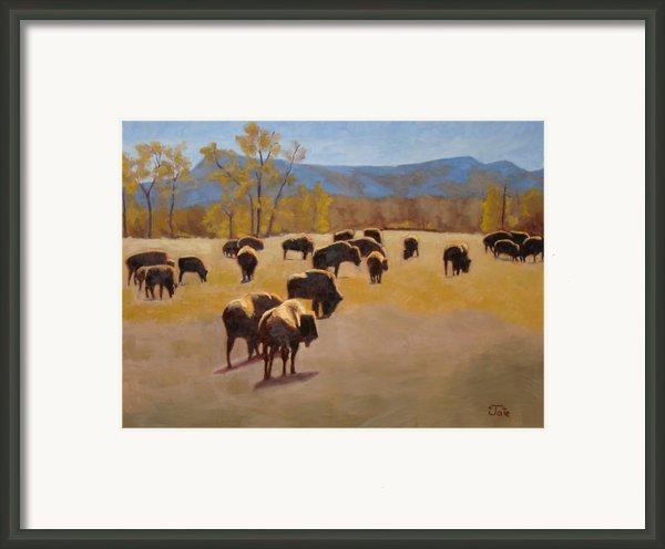Where The Buffalo Roam Framed Print By Tate Hamilton