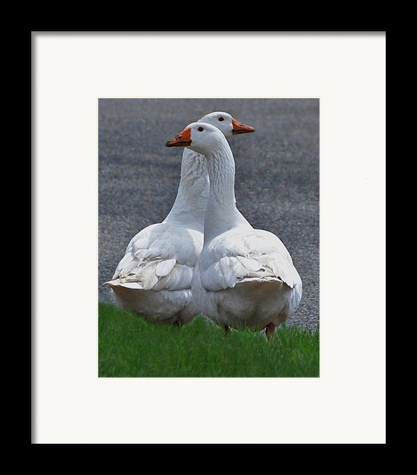 Which Way Framed Print By Lisa  Phillips