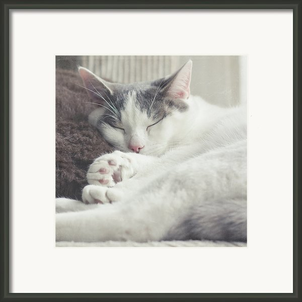 White And Grey Cat Taking Nap On Couch Framed Print By Cindy Prins