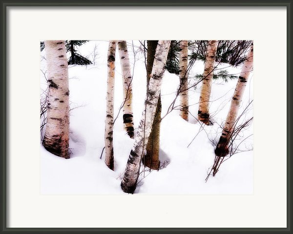 White Birch Trunks - Winter Fine Art Nature  Framed Print By Thomas Schoeller