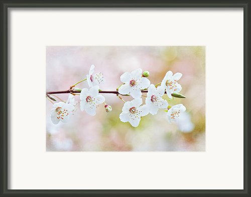White Cherry Blossom Framed Print By Jacky Parker Photography