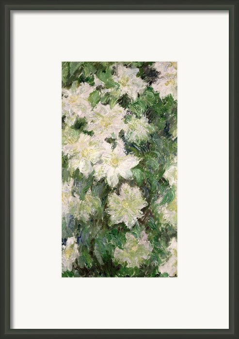 White Clematis Framed Print By Claude Monet