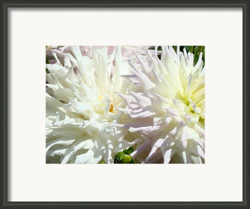 White Dahlia Flowers Art Prints Floral Framed Print By Baslee Troutman Fine Art Prints