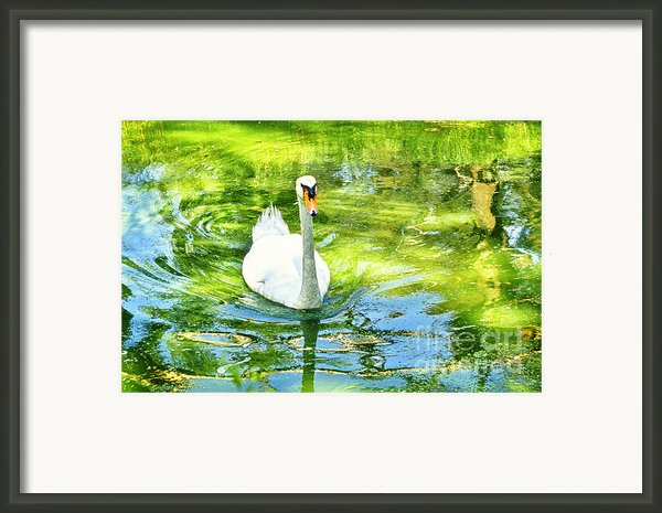 White Duck Framed Print By Benny  Woodoo