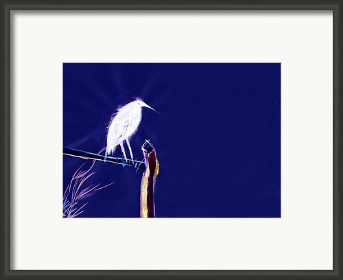 White Egret Framed Print By Anil Nene
