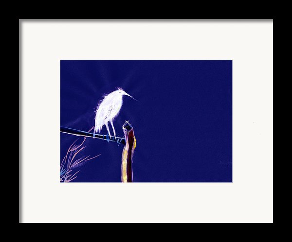 White Egret Framed Print By Anil Nene
