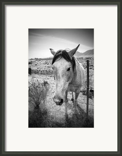 White Horse Framed Print By Mike Hill