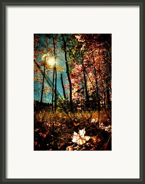 White Leaf Framed Print By Emily Stauring