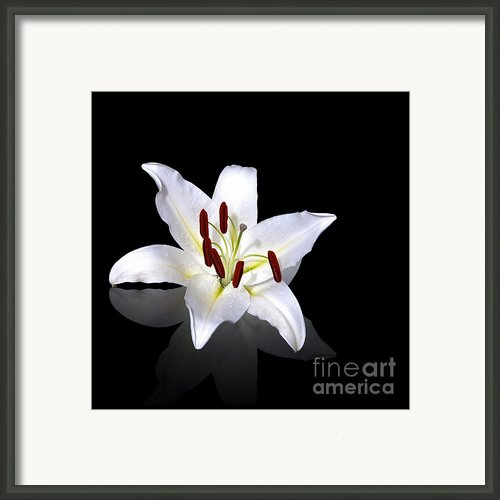 White Lily Framed Print By Jane Rix