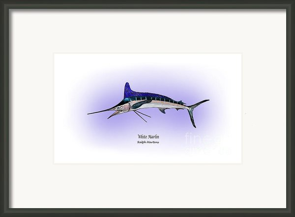 White Marlin Framed Print By Ralph Martens
