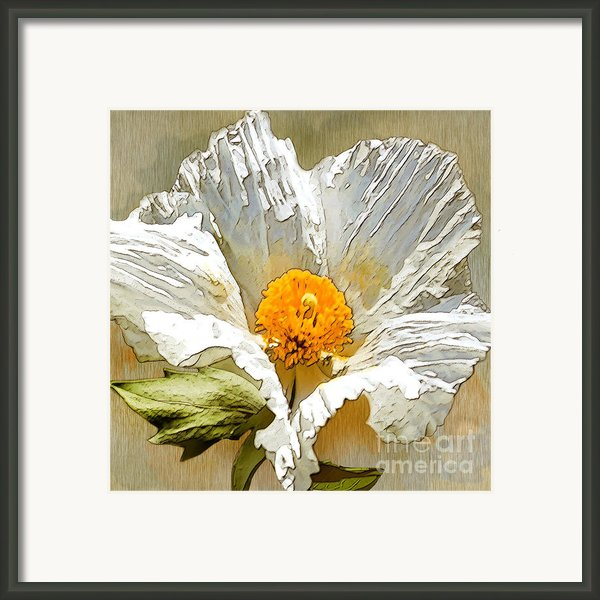White Paper Flower Framed Print By Artist And Photographer Laura Wrede