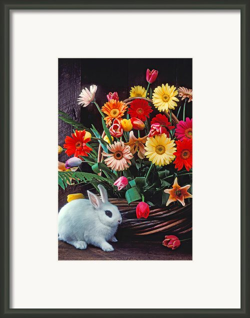 White Rabbit By Basket Of Flowers Framed Print By Garry Gay