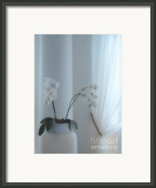 White Series Soft Framed Print By Joyce Hutchinson