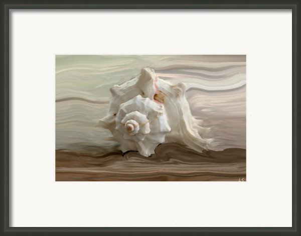 White Shell Framed Print By Linda Sannuti
