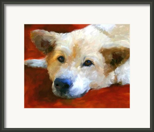 White Shepherd Portrait Framed Print By Jai Johnson