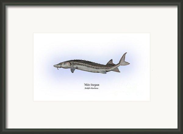 White Sturgeon Framed Print By Ralph Martens
