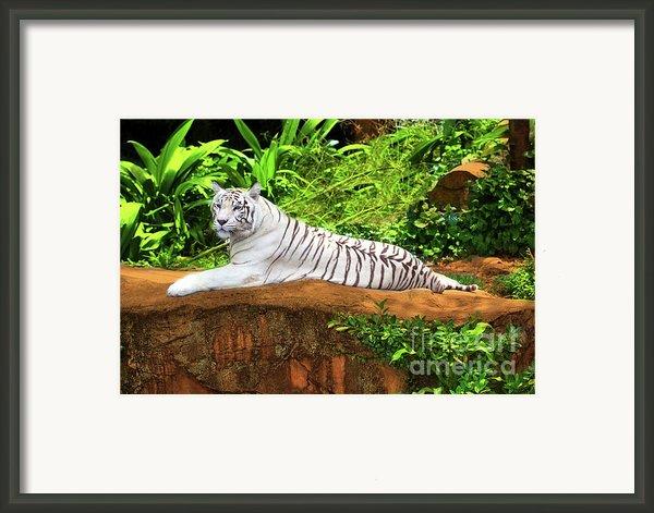 White Tiger Framed Print By Mothaibaphoto Prints