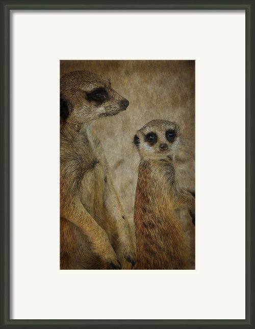 Who Is That Framed Print By Kathryn Potempski