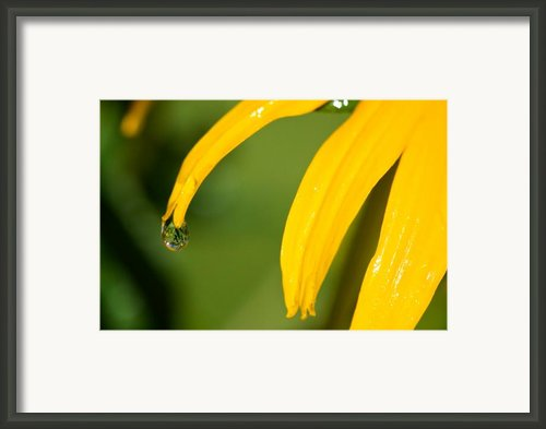 Whole World Water Drop Framed Print By Lisa Knechtel