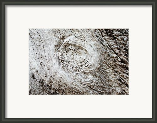 Whorly Wood Framed Print By Lynda Dawson-youngclaus