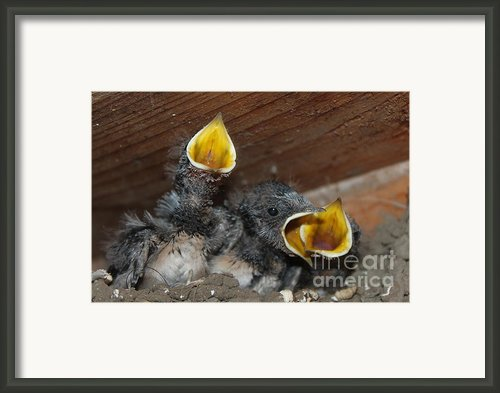 Wild Animals Baby Birds Www.pictat.ro Framed Print By Preda Bianca Angelica