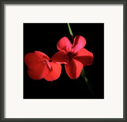 Wild Flowers Framed Print By Gilbert Artiaga