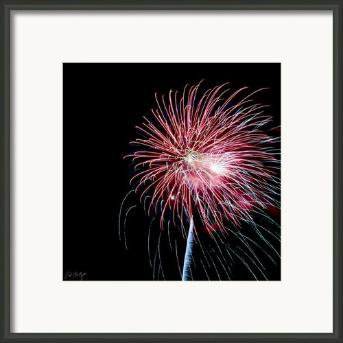 Wild Sky Flower Framed Print By Phill  Doherty