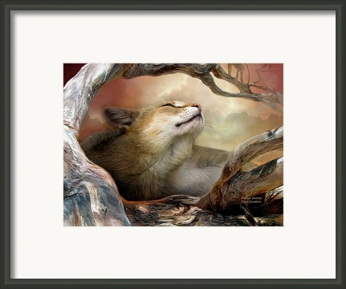 Wildcat Sunrise Framed Print By Carol Cavalaris