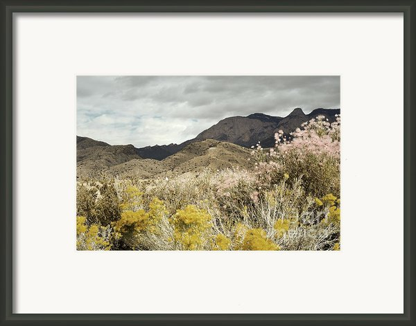Wildflower Mountain Framed Print By Andrea Hazel Ihlefeld