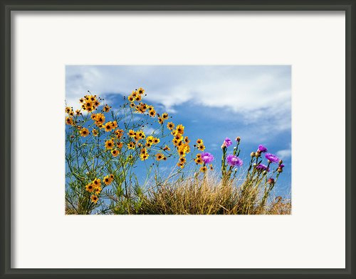 Wildflower Weed Framed Print By Tamyra Ayles