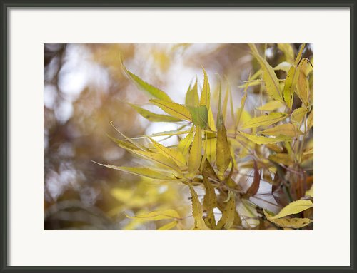 Willow In Autumn Framed Print By Steven Poulton