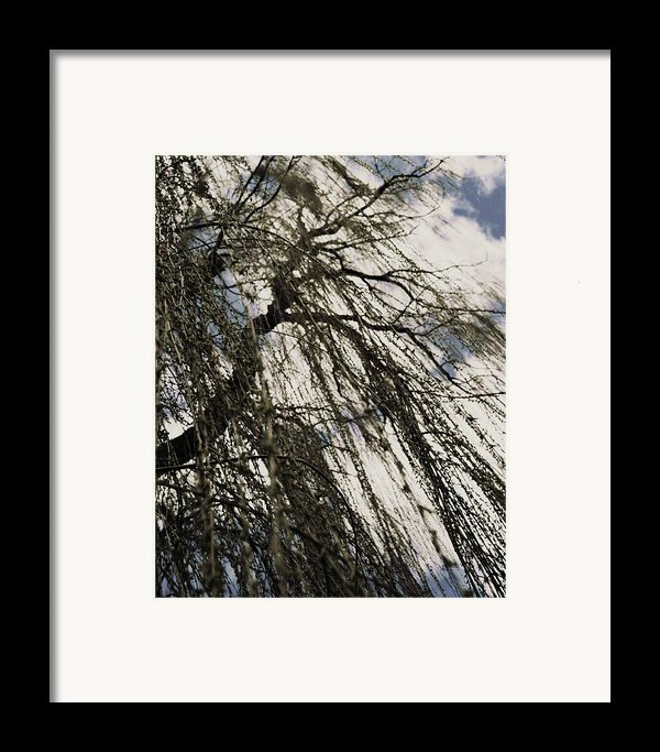 Willow Tree Framed Print By Todd Sherlock