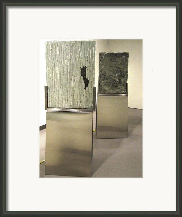 Wilmot River Casuarina Understory Framed Print By Sarah King