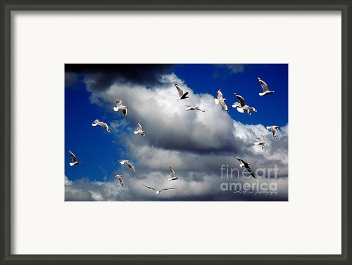 Wind Sailing Seagulls Framed Print By Vicki Ferrari