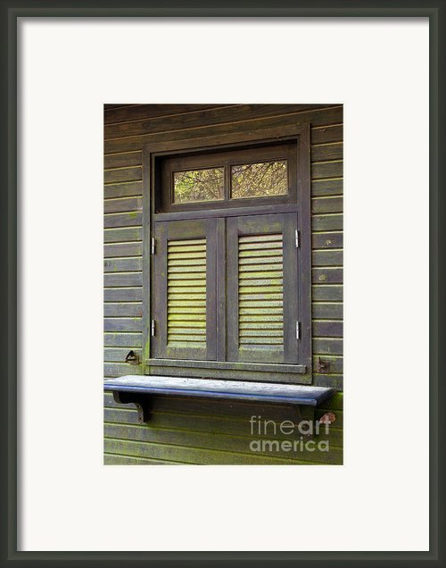 Window And Moss Framed Print By Carlos Caetano