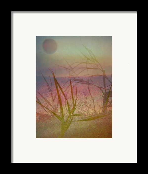 Windswept  Framed Print By Shirley Sirois