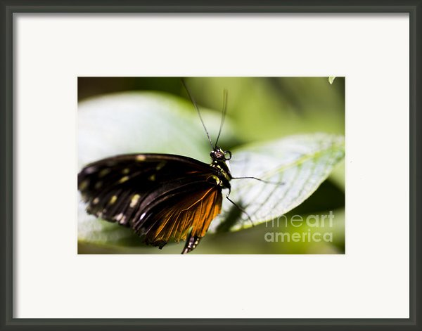 Wings Framed Print By Leslie Leda