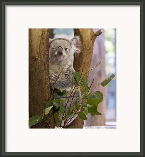 Wink Framed Print By Charles Warren
