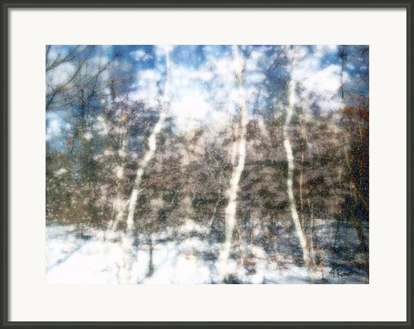 Winter Birch Framed Print By Tom Romeo