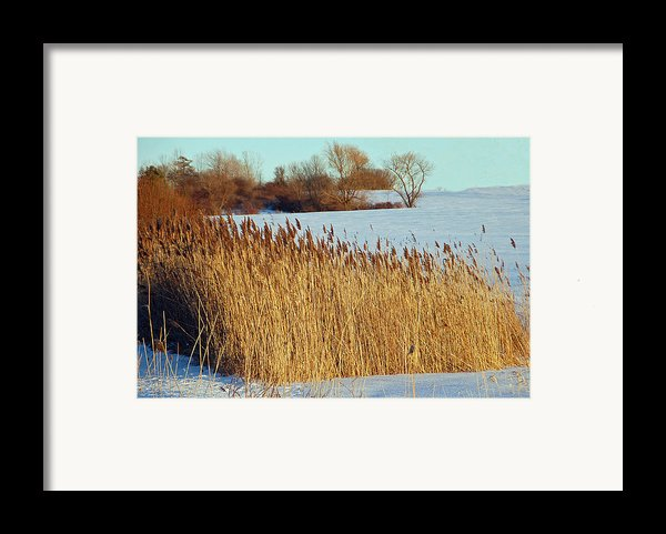 Winter Breeze Framed Print By Aimee L Maher Photography And Art