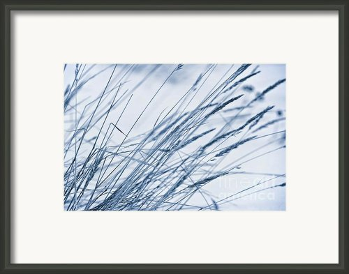 Winter Breeze Framed Print By Priska Wettstein