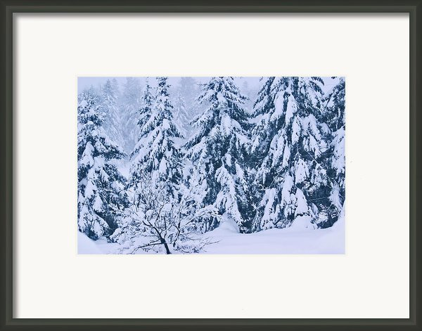 Winter Coat Framed Print By Aimelle