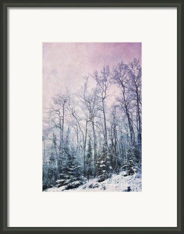 Winter Forest Framed Print By Priska Wettstein