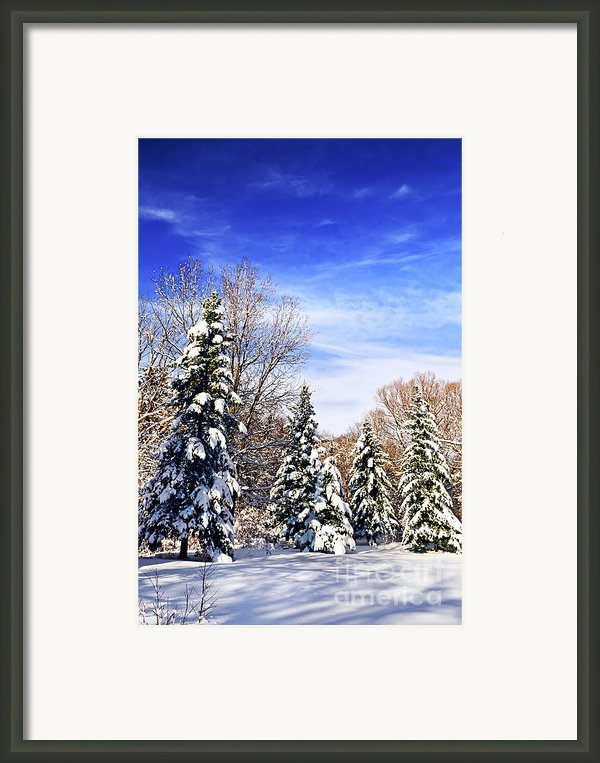 Winter Forest Under Snow Framed Print By Elena Elisseeva