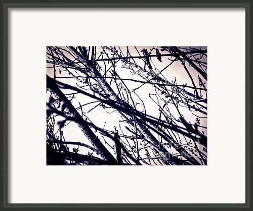 Winter Reflection Ii Framed Print By Mira Dimitrijevic