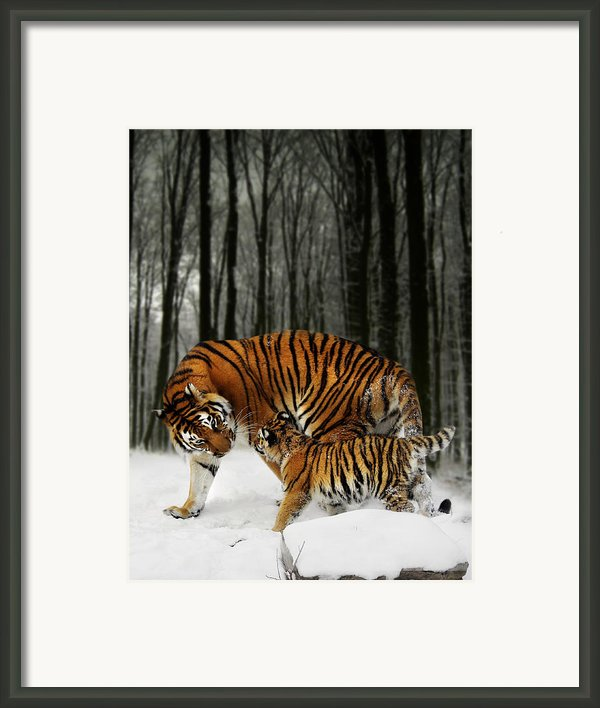 Winter Stroll Framed Print By Julie L Hoddinott