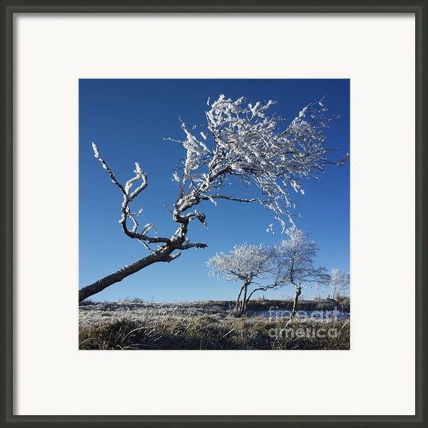 Winter Tree. Framed Print By Bernard Jaubert