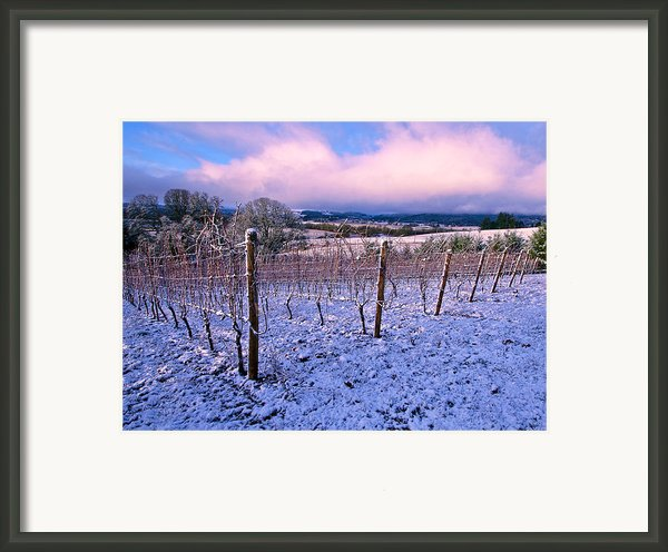 Winter Vineyard Framed Print By Jean Noren