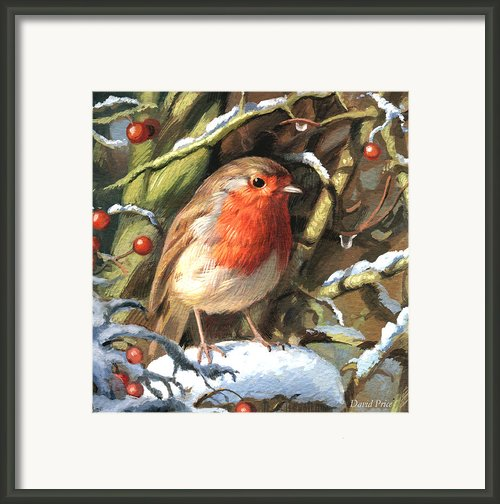 Winters Friend Framed Print By David Price